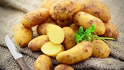 Tepenhof Kartoffeln Annabell festkochend super lecker 12,5kg goldgelb Kartoffel