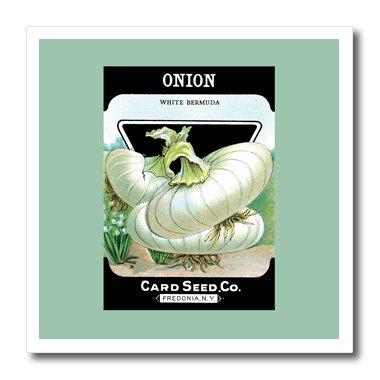 3dRose Zwiebel weiß Bermuda Gemüse Samen Paket Reproduction-Iron auf Wärmeübertragung, 8von 20,3cm für weiß Material (HT 170462_ 1) - Transfer Bermuda