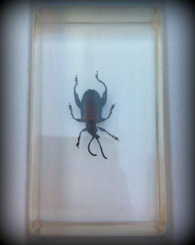 arthropod-japanese-beetle-7-x-4cm