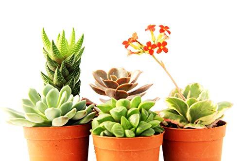 piante piccole