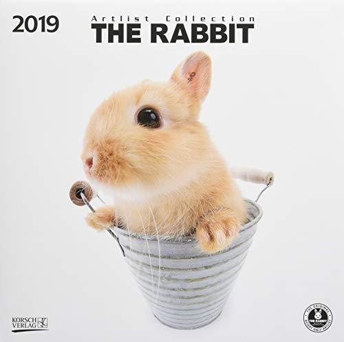 The Rabbit 2019: Broschürenkalender mit Ferienterminen. Süße Nahaufnahmen von Kaninchen mit edlem weißen Hintergrund. 30 x 30 cm - Wandkalender