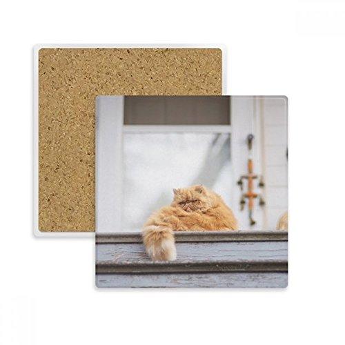 Animal Fat Garfield Katze Foto quadratisch Untersetzer Cup Becher Halter saugfähig Stein für Getränke 2Geschenk -