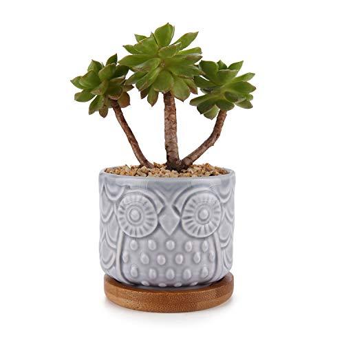 ComSaf Vaso per Pianta Grassa Vaso di Piante con Vassoio di bambù Blu Chiaro 6.6CM Ceramica Gufo, Fioriere di Cactus Contenitori Vasi di Fiori Decorativo del Desktop Davanzale Bonsai