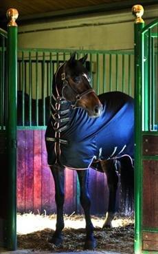 horseware-ireland-rambo-dustbuster-plus-black-with-tan-orange-black-66