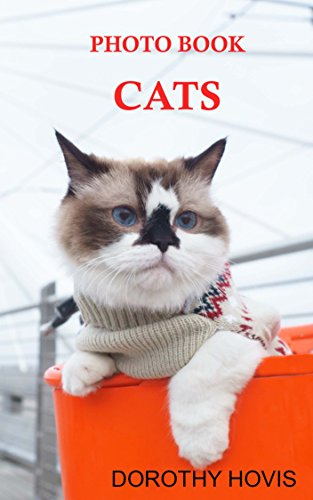 PHOTO-BOOK-CATS-KITTENS-AND-CATS-FOR-KIDS-English-Edition
