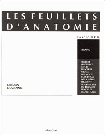 Les feuillets d'anatomie. Thorax