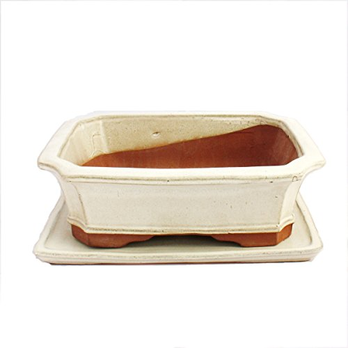 Bonsai Bol avec sous assiette Taille 5 - Beige clair - Rectangulaire - Modèle G4 - L 31 cm - B 23 cm - H 9,5 cm