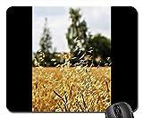 Gaming-Mauspads, Mauspad, Hafer Landwirtschaft Getreide Getreide Tierfutter Acker