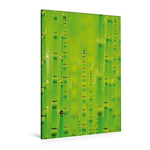 Premium Textile Toile 30 cm x Hauteur 45 cm decoratif de - La Prele d'hiver (Equisetum Hyemale), 80x120 cm por k.A. CALVENDO epub