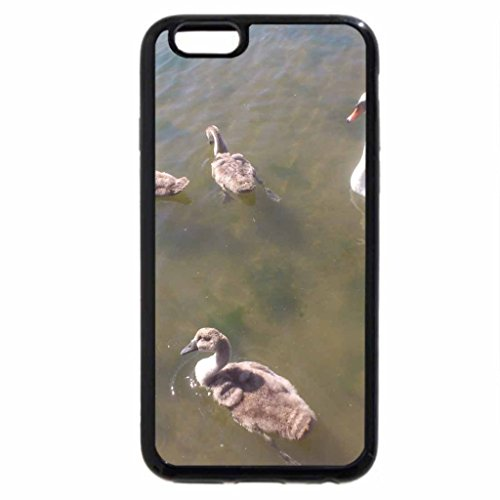 iPhone 6S / iPhone 6 Case (Black) swan family still doing well