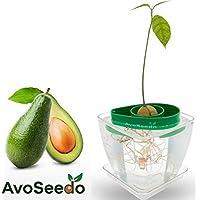 Avoseedo Set di Vasi Moderni - Coltiva il tuo albero di Avocado - Uso interno ed esterno. ìdee Regalo donna / uomo