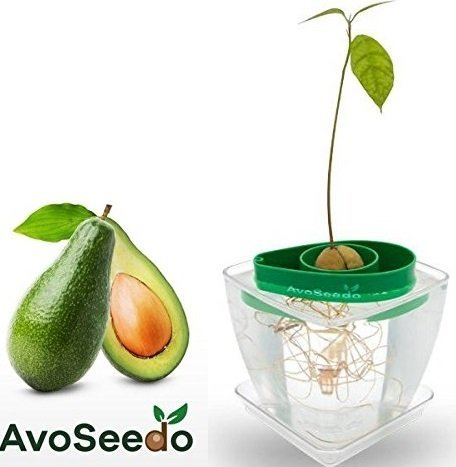 avoseedo–Maceta Set–árbol de aguacate Kit de cultivo interior/al aire libre, Transparent / Green