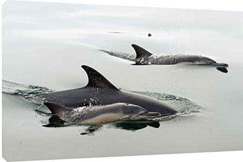 MOOL Hundebett, rechteckig, 32 x 22 cm großes Delfine, auf Holzrahmen gespannt wasserfester Giclée-Überzug, fertig zum Aufhängen, Kunstdruck auf Leinwand, Mehrfarbig (Holzrahmen Hundebett)