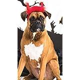 Dogs & Co Halloween LED Light Devil Horns. One Size, Red