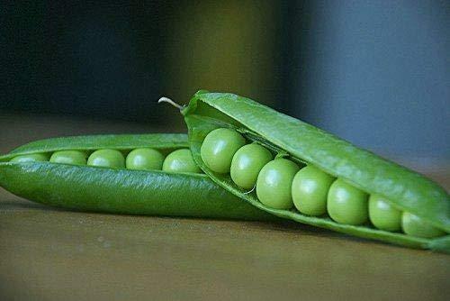 GEOPONICS Swe Basil: s, Spears, Schokolade s, Peppers - Live-Pflanze - Bio-NON-GMO -