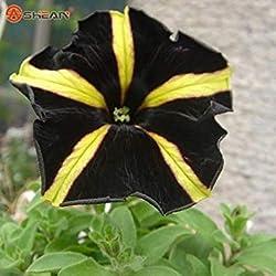 Fash Lady Berserker Angebote Förderung Balkon Topf Seltene Blaue Weiße Petunie Blumensamen Blühende Pflanzen 100 Partikel/Lot
