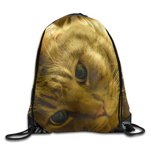 rwwrewre Kordelzug Turnbeutel,Silver Tabby Cat Lying On The Ground Drawstring Bag Backpack Bags Sports Sack String Backpack Storage Bags for Gym Traveling (Silver Dollar Anzeige)