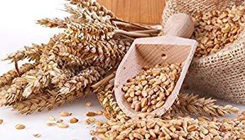 Potseed Keimfutter: 240: Organische EMMER Farro 60-300 Seed Schiffe aus den USA Garten Sprießen Microgreens