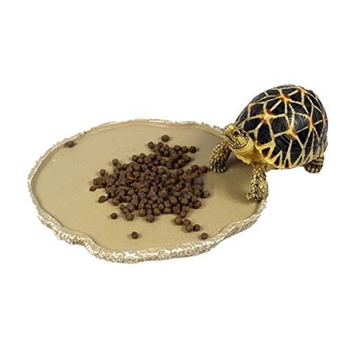 tterung Platte Reptil Fütterung Schüssel Vivarium Lebensmittel Wasser Dish Harz Schüssel für Schildkröte Gecko Schlange Haustier Zucht Tray ()