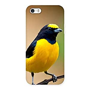 Stylish Sweet Bird Back Case Cover for iPhone SE