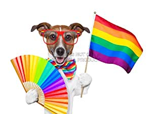 PAINTING ILLUSTRATION JACK RUSSELL DOG GAY PRIDE FLAG ART PRINT 12x16 '' POSTER MP3127B