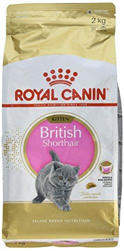 Royal Canin KITTEN British Shorthair Katzenfutter 2 kg, 1er Pack (1 x - Katzenfutter Kurzhaar British