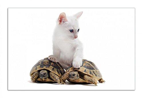 Wallario Herdabdeckplatte/Spritzschutz aus Glas, 1-teilig, 80x52cm, für Ceran- und Induktionsherde, Motiv Katze auf Schildkröten