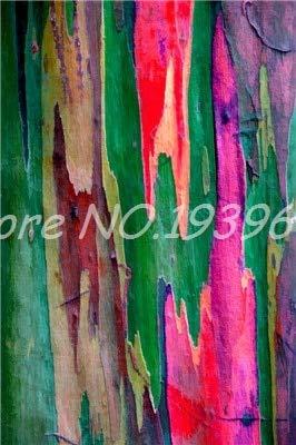 Ventes! 200 pcs/sac Rare arc en ciel, arbre tropical Showy, vivace Bonsai Potted Maison et Jardin (E 5 mixtes GRAINES SEULEMENT)