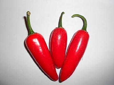 Jalapeno Pepper 10 Samen (Massenträger) von Samenchilishop auf Du und dein Garten