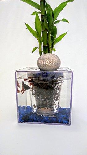 Fisch O 'ponics Fisch Tank Übertopf (Versand von uns innerhalb 2Tage) selbstwässernde Pflanztopf, in Home Decor, Schreibtisch, Bar TOP, Fensterbrett Wasser Garten. -