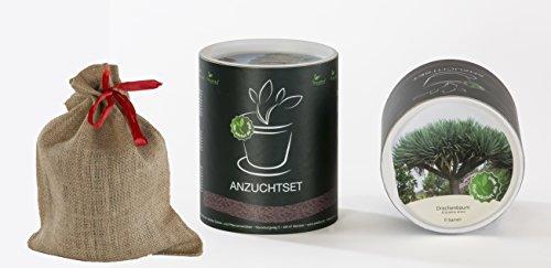Seedeo Anzucht-Geschenkset Drachenbaum (Dracaeno draco)
