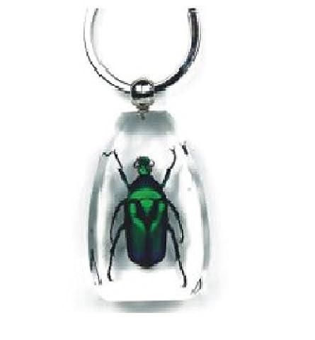 Real Green Rose Chafer–Große Schlüssel Ring Clear Insekt Specimen