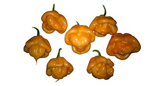 Bahamian -Goat Pepper- 10 Samen *Neu* Tolle Fruchtform
