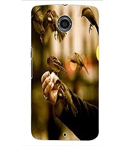 ColourCraft Sparrow Birds Design Back Case Cover for MOTOROLA GOOGLE NEXUS 6