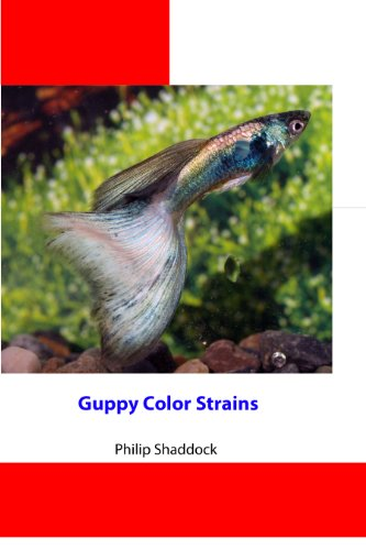 Guppy Color Strains (English Edition)
