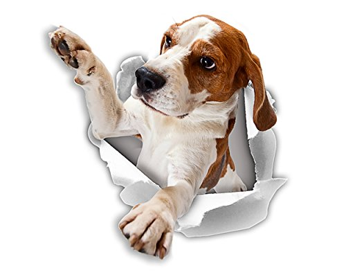 Winston & Bear Pegatinas 3D perro - 2 Pack - llegar a Beagle pegatinas para pared, pegatinas de Beagle de nevera