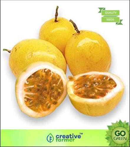 Pinkdose Fruchtsamen: Passionsfruchtsamen Schnelle Fruchtpflanzensamen Fruchtsamen Samen