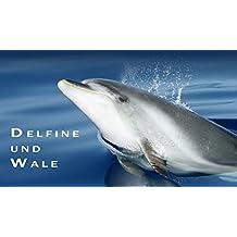 Delfine und Wale: ein Immerwährender Fotokalender