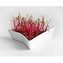 Mr. Sprouty germogliatore premium, confezione 3 in 1: vaso in ceramica + cappello in feltro + germogli base