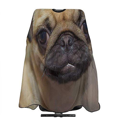 Porträt von Mops-lustigem Hundefriseur-Salon-Kap-Schürzen-Make-up kämmen heraus Kap-Schellfisch, Salon-Haarfärbemittel