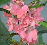Pinkdose 100 pcs/sac Bonsai Impatiens Baume aux fleurs Double Flore Plantas Indoor & amp; Plante d'extérieur en pot pour la maison & amp; Plantation en pot de jardin: 7