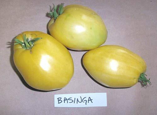 Shoopy Star Graines de tomate - Basinger - tomate en forme de coeur - BIO - 40 graines