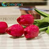 2016 Nouveaux Seeds 30 Pcs / lot rares Graines de Tulip Plantes Flower Garden Bonsai pot Sementes De Flores Seed SeedsAndPlants Jardin Décoration Pot