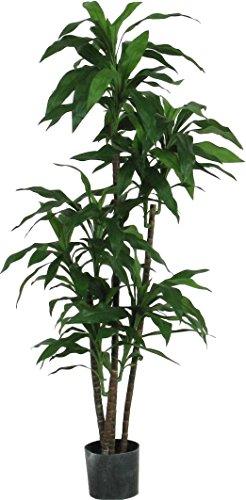 Dracena fragrans verde - albero artificiale da arredo interno con tronchi veri - alto 140-150 cm
