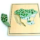 Montessori Puzzle Esqueleto de Rana Animales