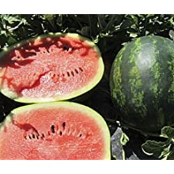 Bobby-Seeds Melonensamen Mini Love F1 Wassermelone Portion