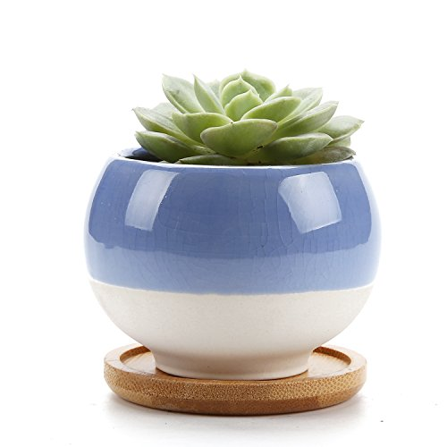 Rachel's 7.5CM Forma de Bola Suculento Cactus Macetas Jardineros de Macetas Contenedores Cajas de Ventana Con Bandeja de Bambú Azul, Paquete de 1