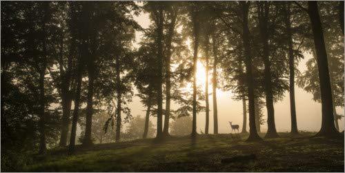 Posterlounge Acrylglasbild 160 x 80 cm: Hirsch im Morgennebel von Leif Løndal / 1x - Wandbild, Acryl Glasbild, Druck auf Acryl Glas Bild