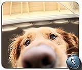 Mauspad, lustige Labrador Retriever Hund, Mousepad (Hunde Mauspad)