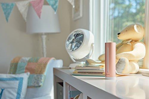 41Jxiz%2BSIeL [Bon Plan Netatmo] Netatmo Capteur de qualité de l'air intérieur Connecté, température, humidité, Bruit, CO2